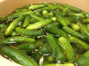 Kirby cucumbers bathing in a brine of garlic and spices, destined to become New Pickles.