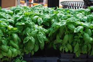 Bushels of Basil