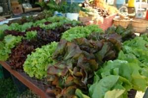 Garden-Fresh Lettuce