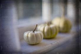 White Jack-A-Boo Pumpkins